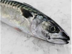 Caballa - O almacén do peixe