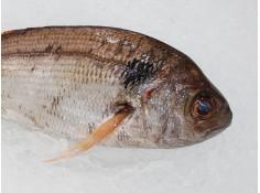 Besugo - O almacén do peixe